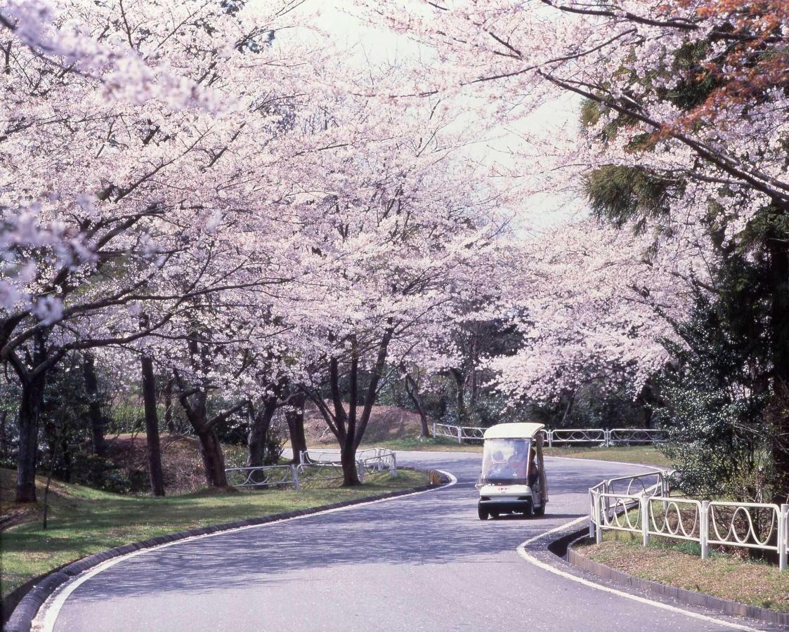 Sakura Boulevard