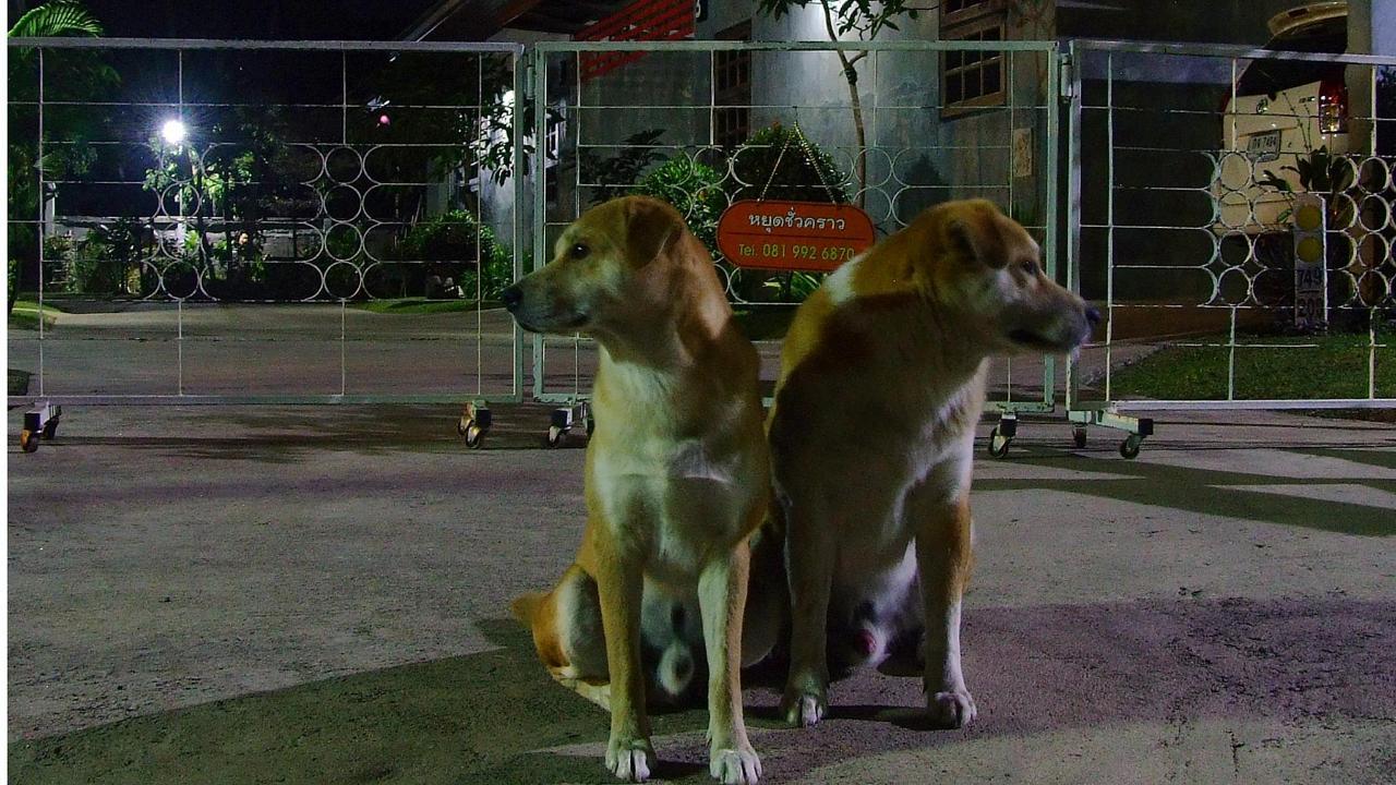 Pets:security guard