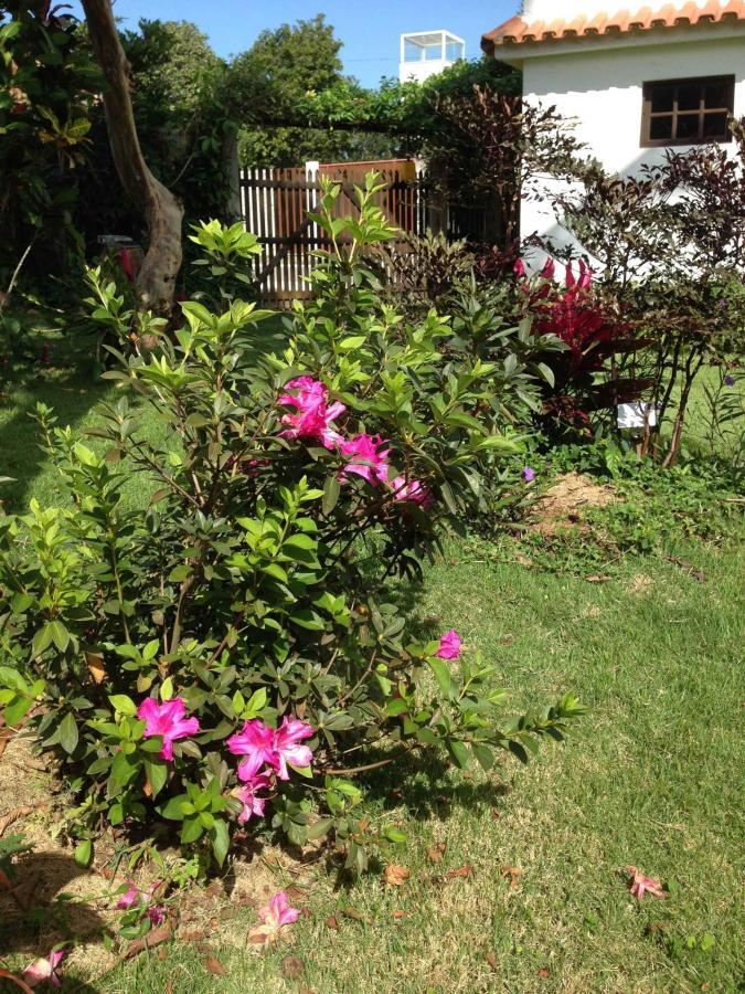 Flores do quintal