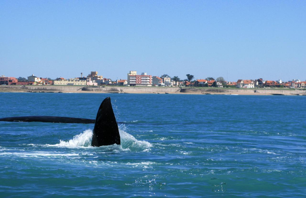 MIRAMAR - Southern Right Whales. Hotel Turingia.jpg