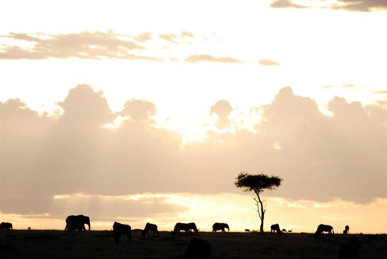 Sunset in the Mara North.jpg