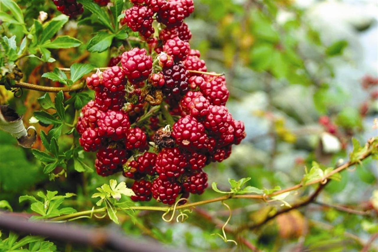 berries.jpg.1024x0.jpg