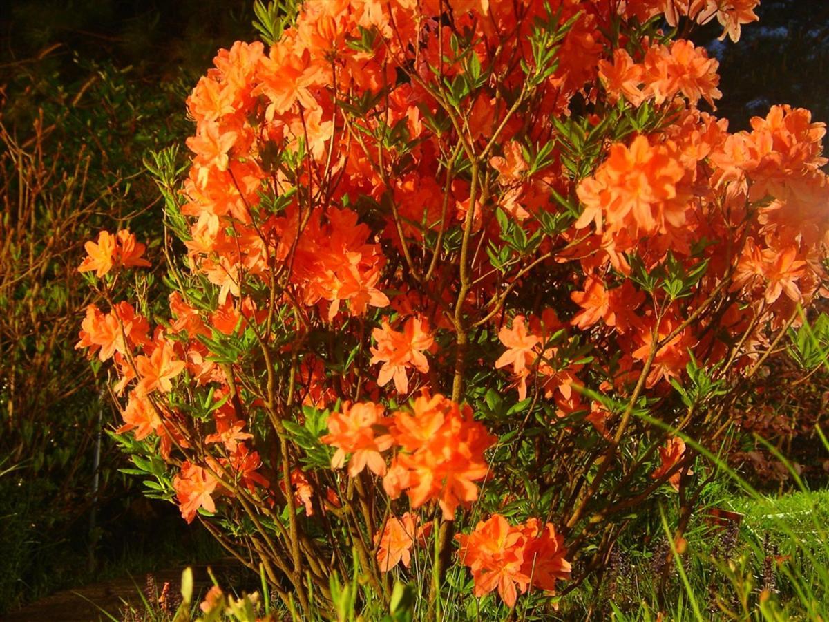 2005-10-39-003.jpg.1024x0.jpg