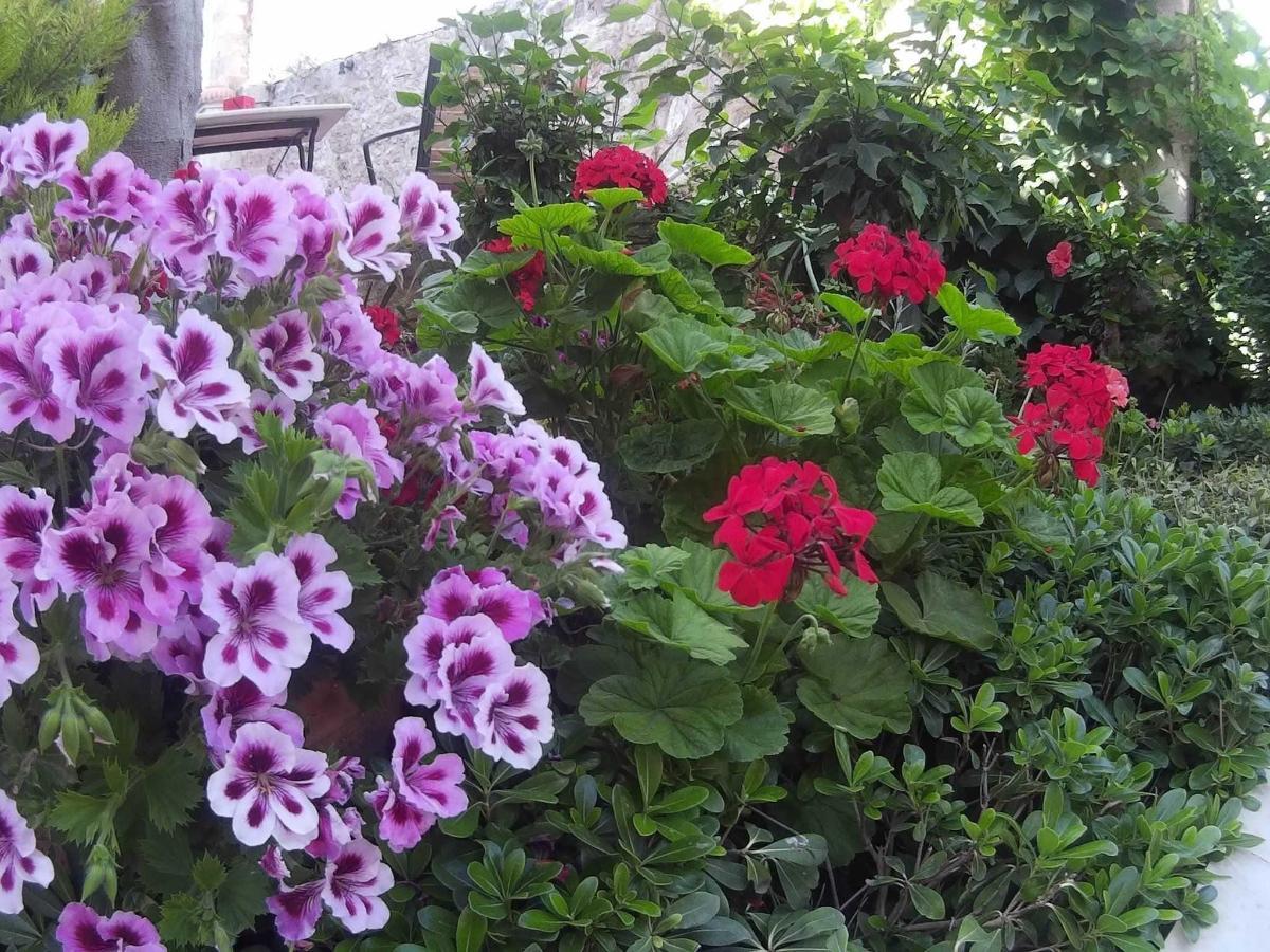 Naš vrt