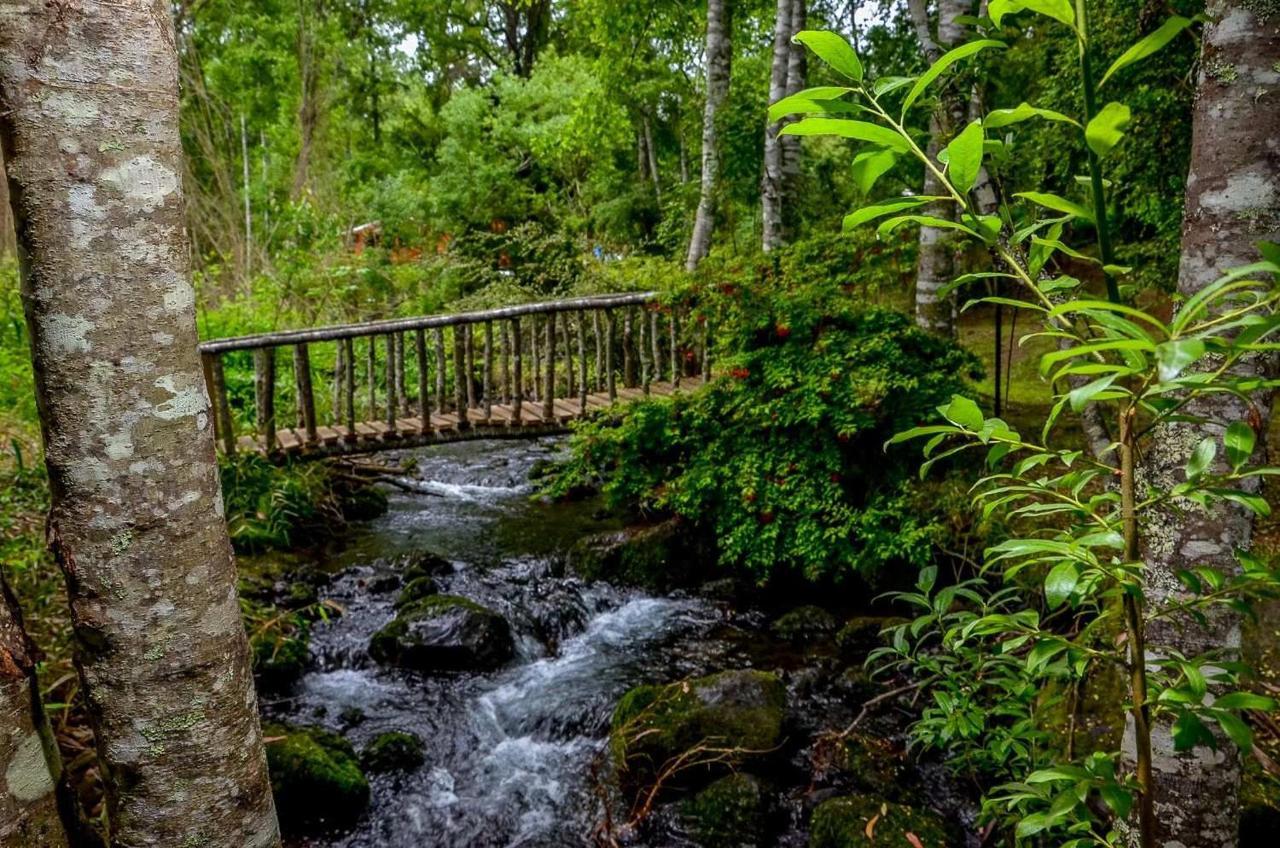 Estero Loncotraro