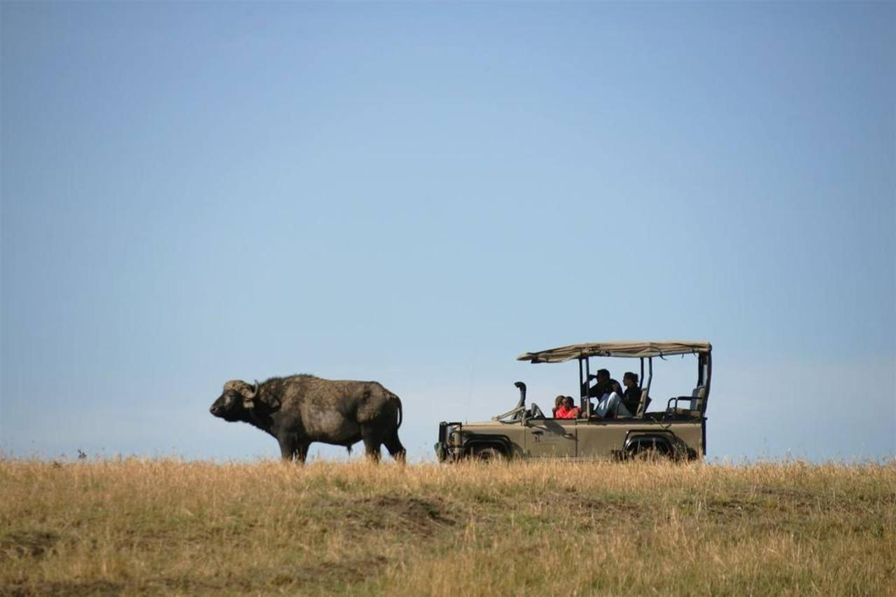Buffalo on a game drive.jpg