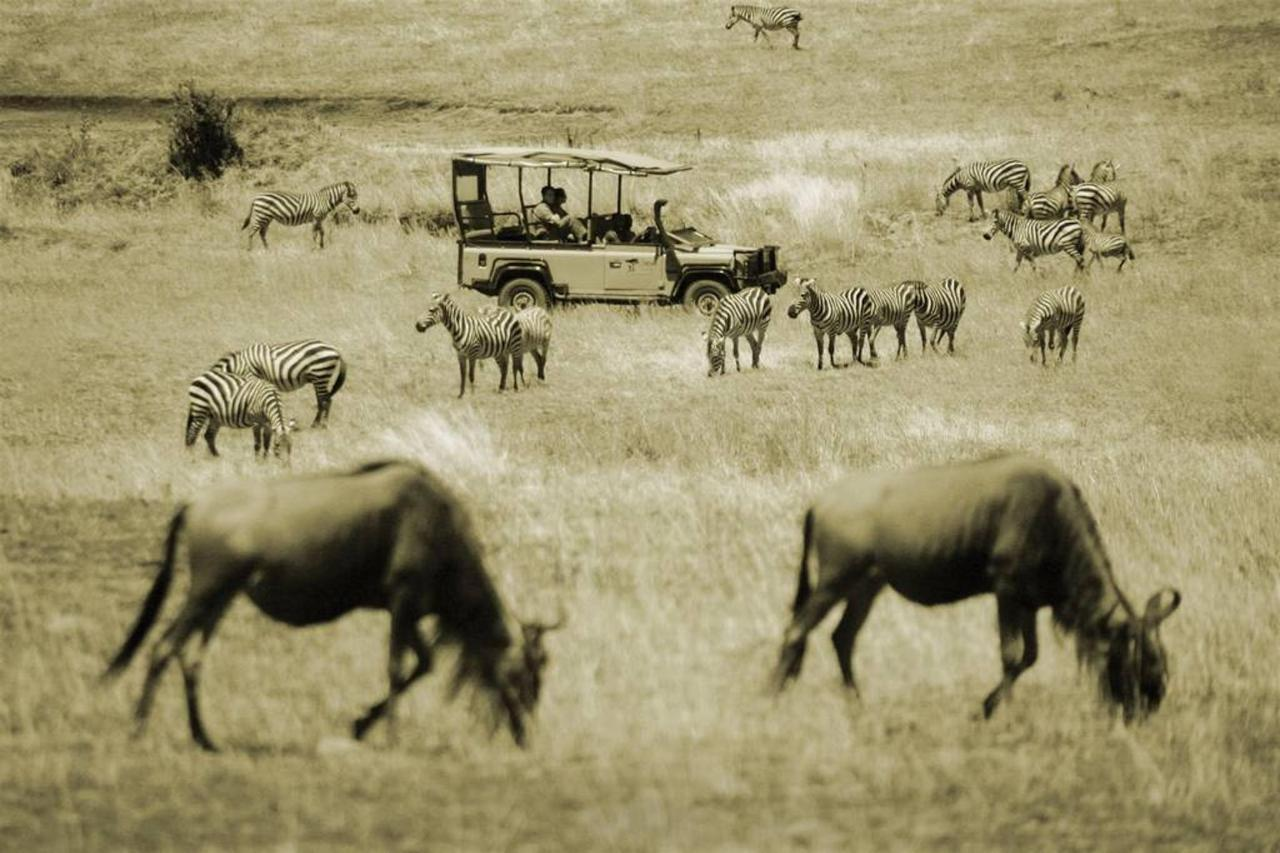 Saruni Mara car among plains game.jpg