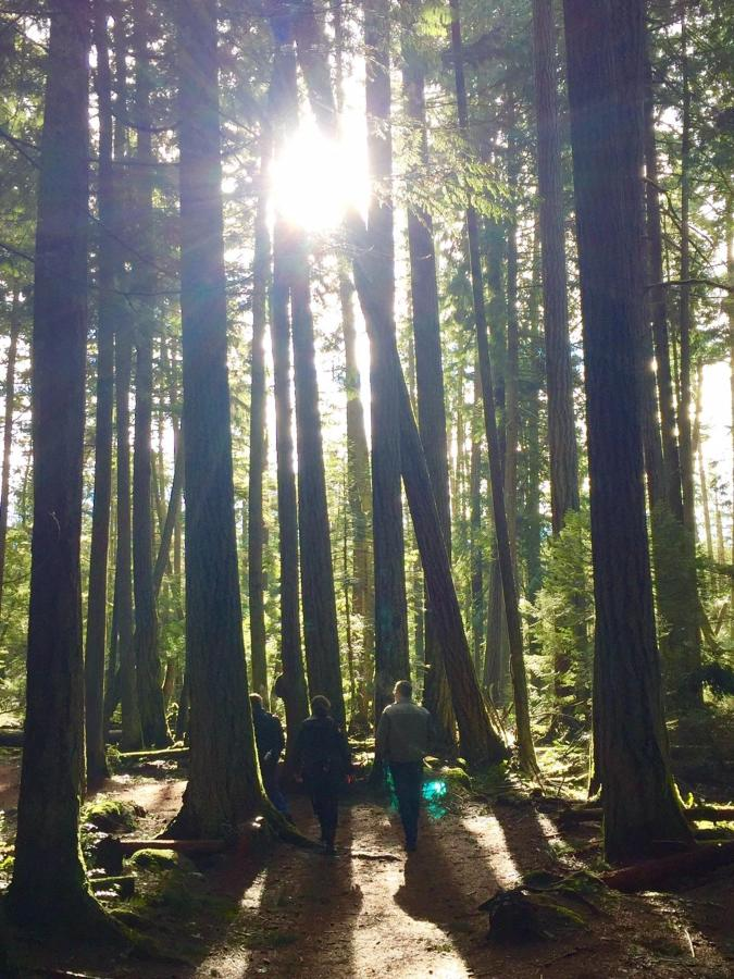 Tigh-Na-Mara Forest Bathing Trees