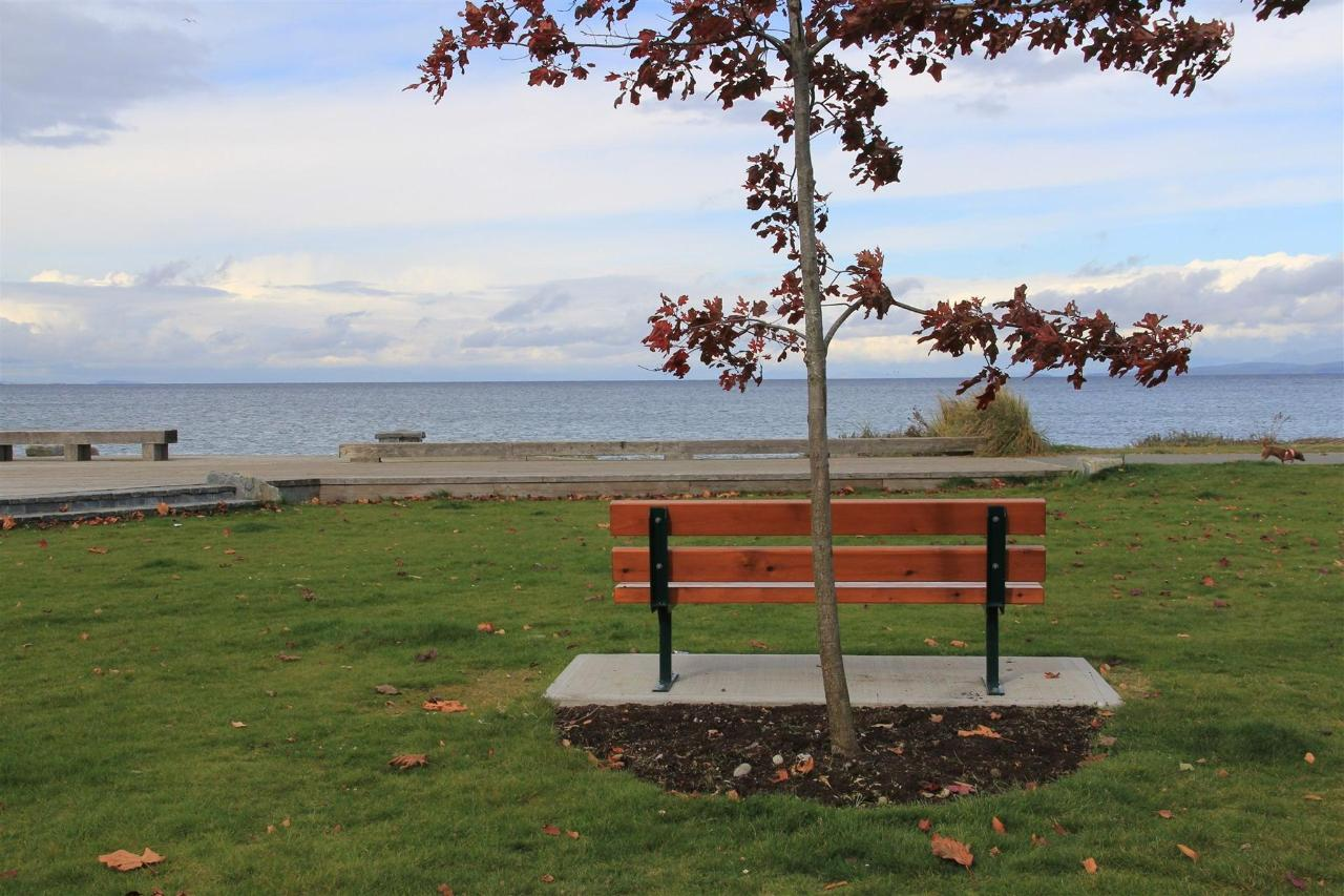 Vancouver Island Beach View Maple Analarai
