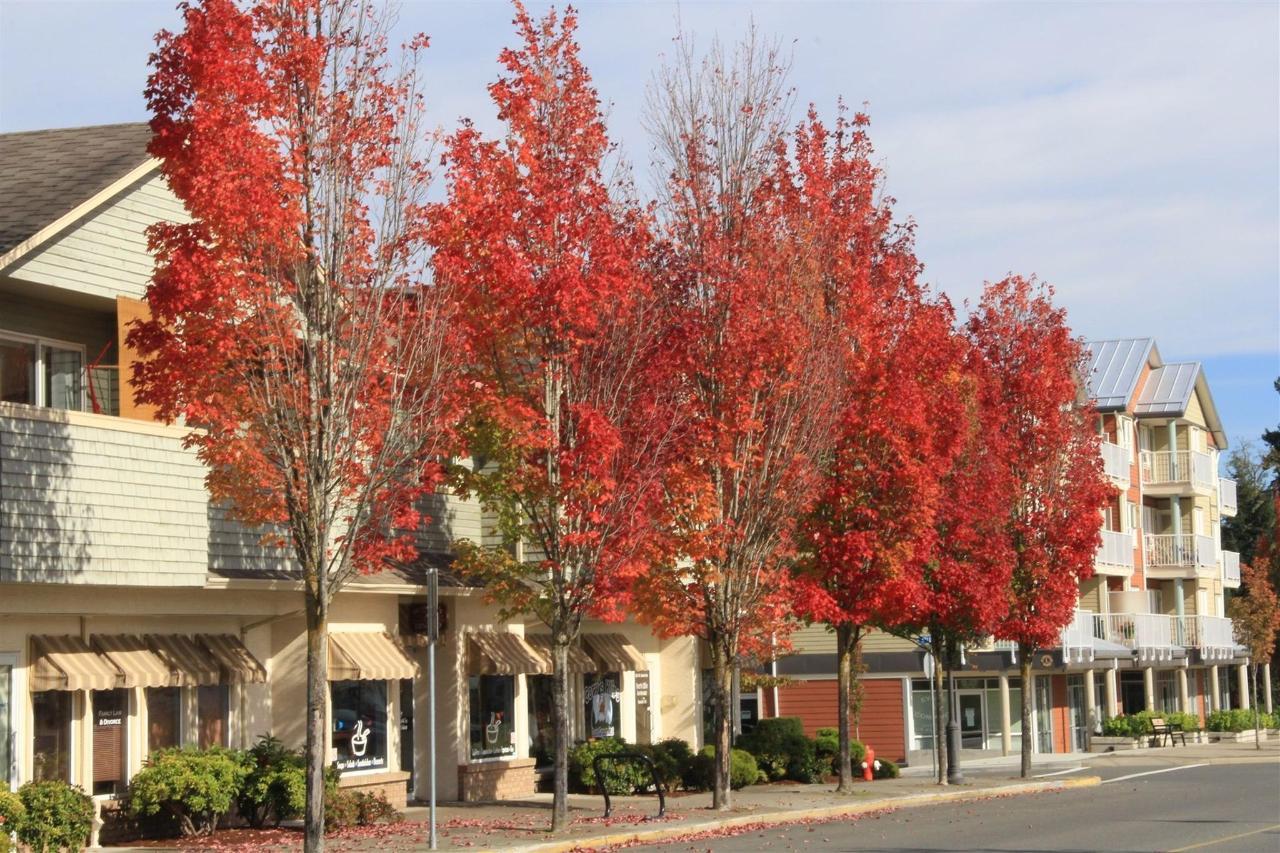Vancouver Island Parksville Analarai Fall Autumn