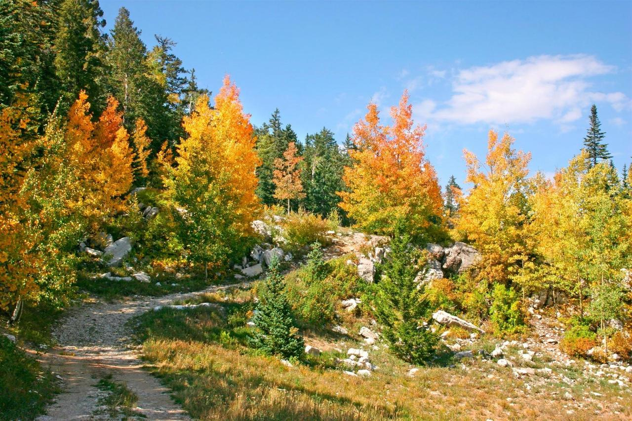 fall-colors-in-the-sandia-mountains.jpg