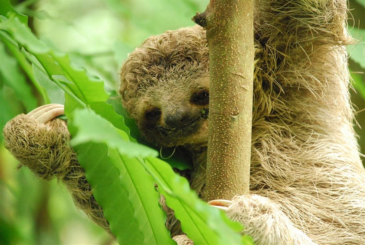 baby-sloth-300-dpi.jpg.1024x0.jpg