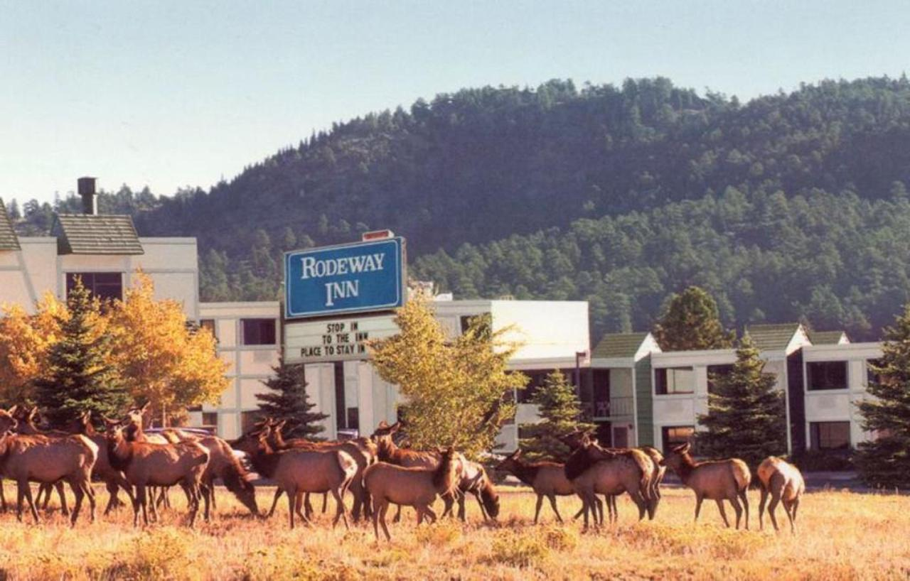 Elk in the Fall.jpg
