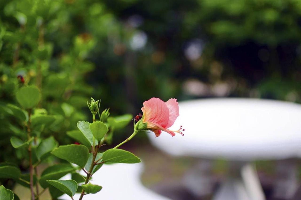 property - Hummingbird - Saint lucia34.jpg