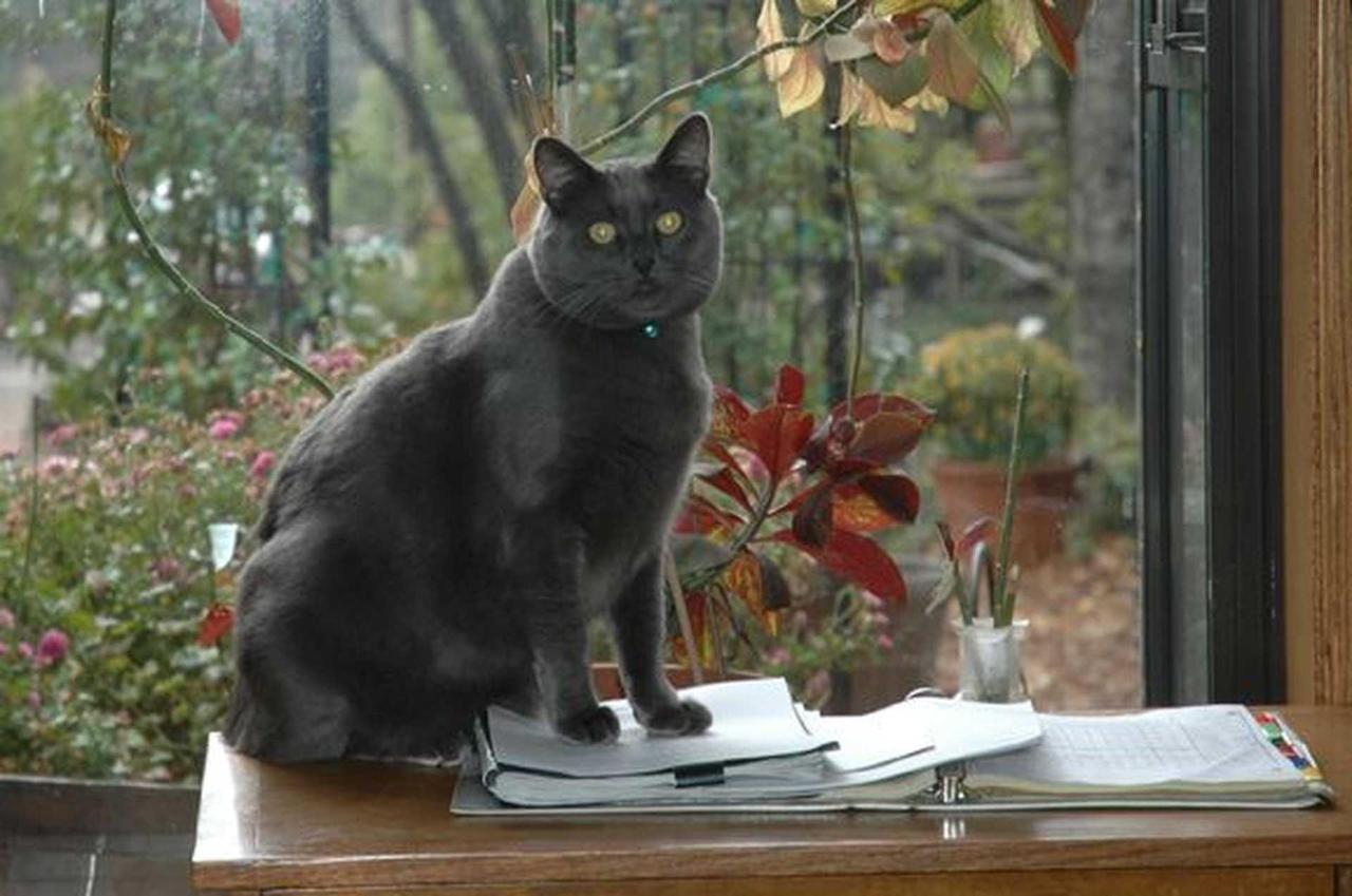 taunto-cat.jpg.1920x0.jpg