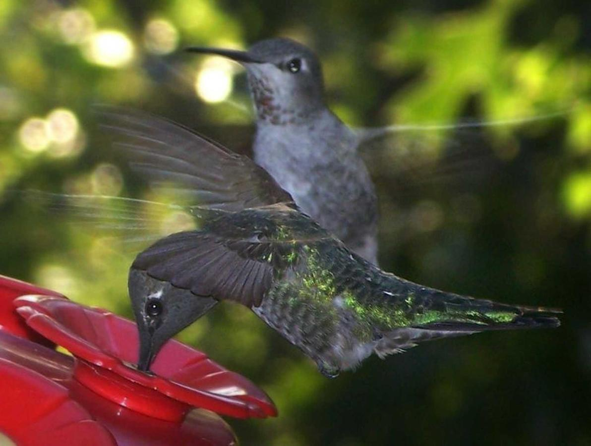 hummers-close-up-1.jpg.1920x0.jpg