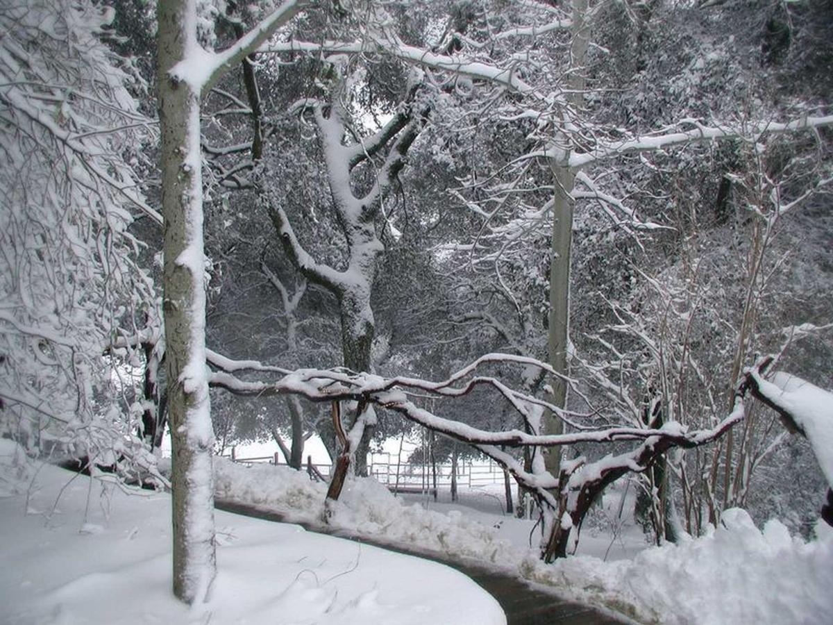 snow-5-1.jpg.1920x0.jpg