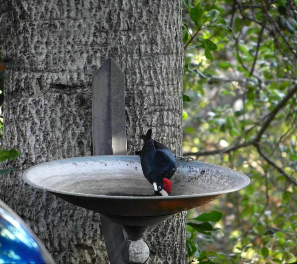 woodpecker-1-1.jpg.1920x0.jpg