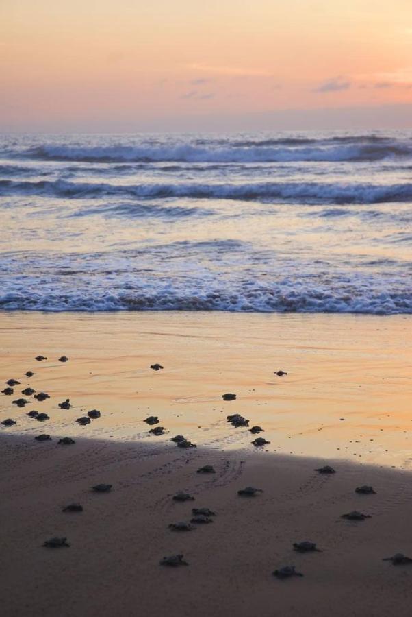 Liberando tortugas
