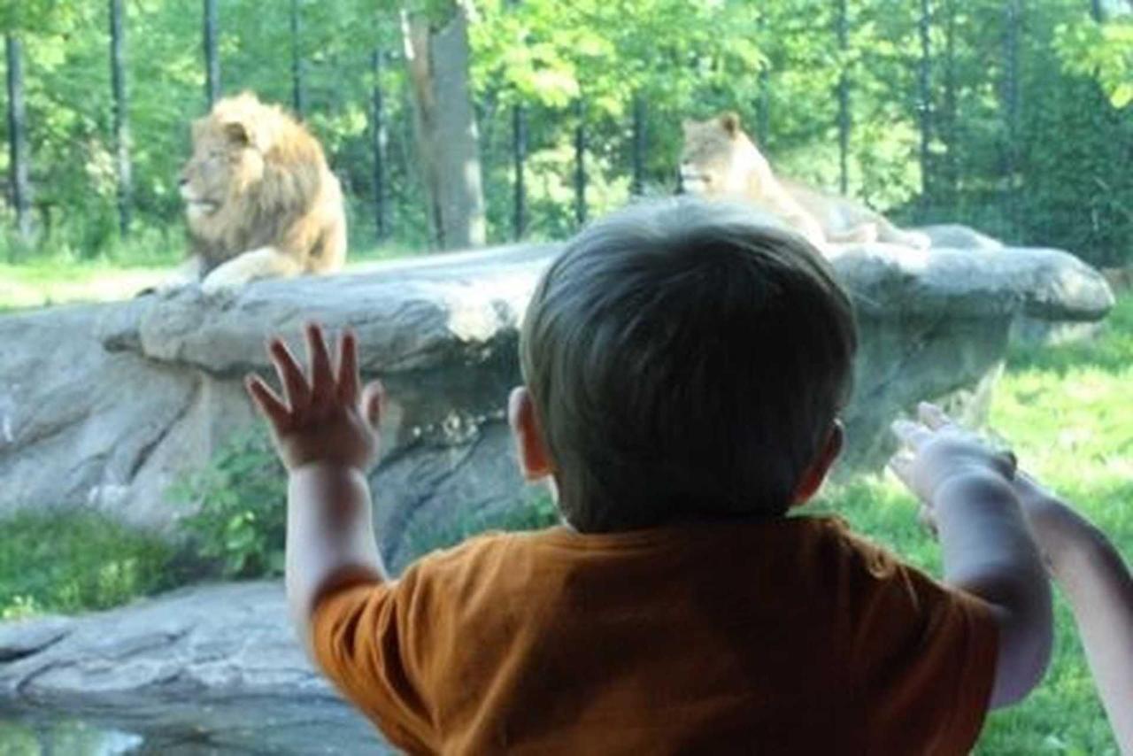 zoo.jpg.1920x0.jpg