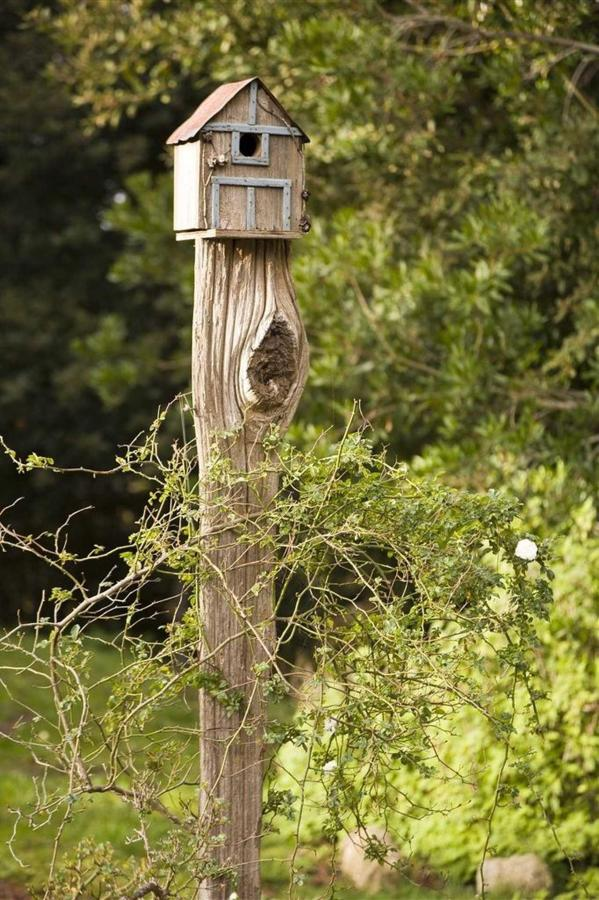 bird-house-hi-res.jpg.1920x0.jpg