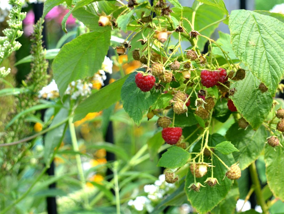 Union Gables Inn Saratoga Springs NY summer raspberries