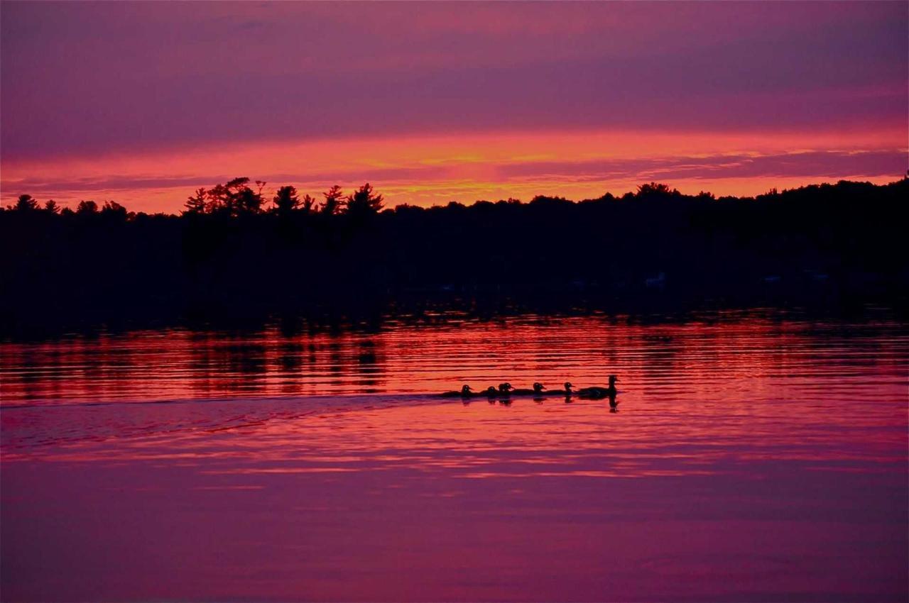 sunset-loons.jpg.1920x0.jpg