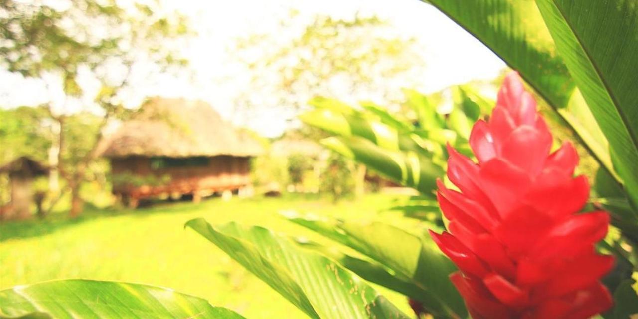 suchipakari-3.jpg.1080x540.jpg