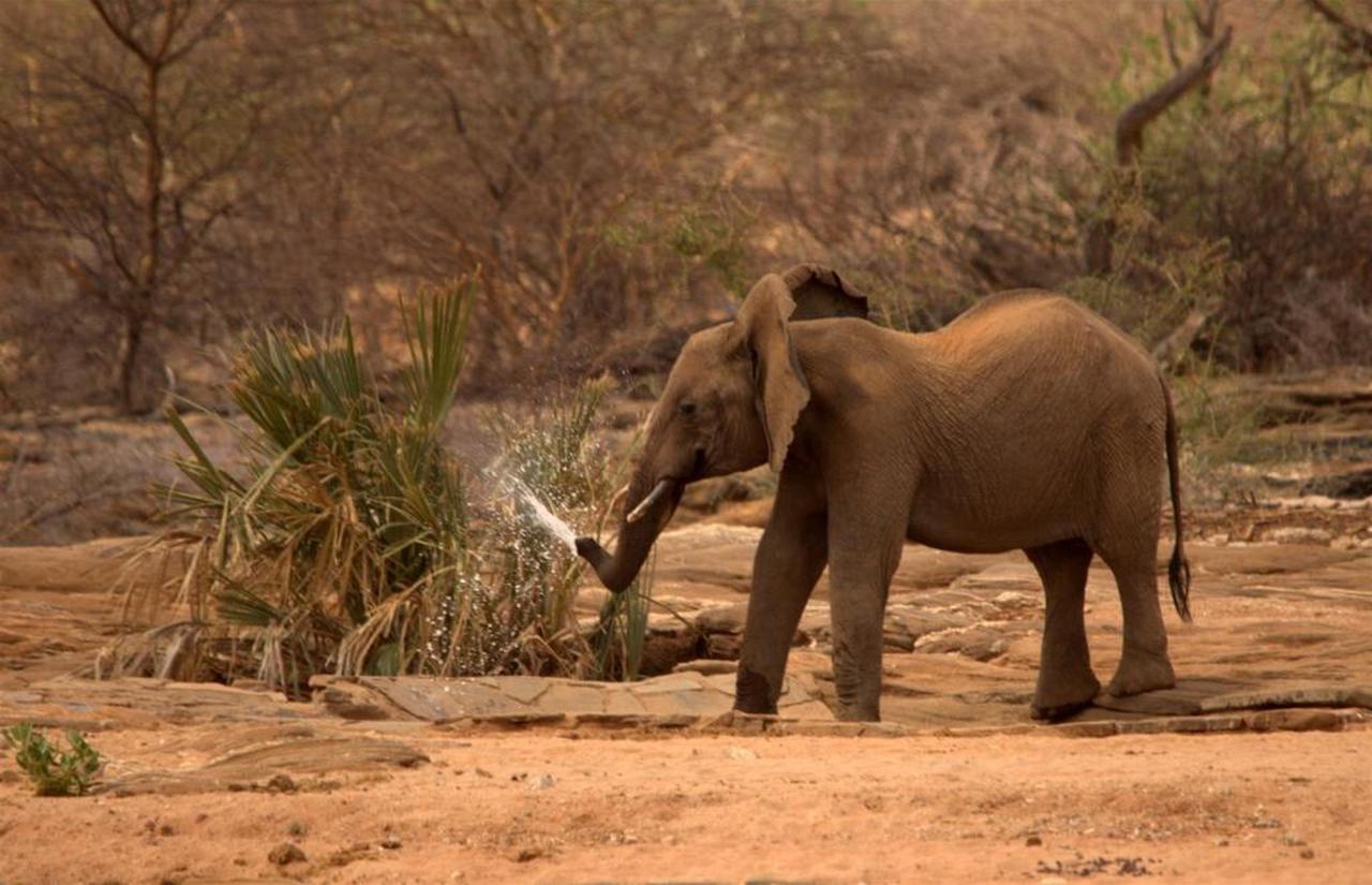 Elephants at the waterhole by Tarn Breedveld.jpg