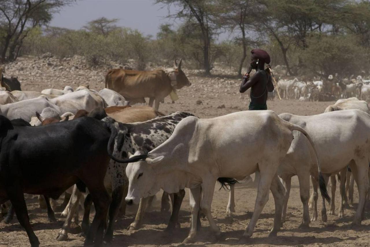 Livestock at the wells.jpg