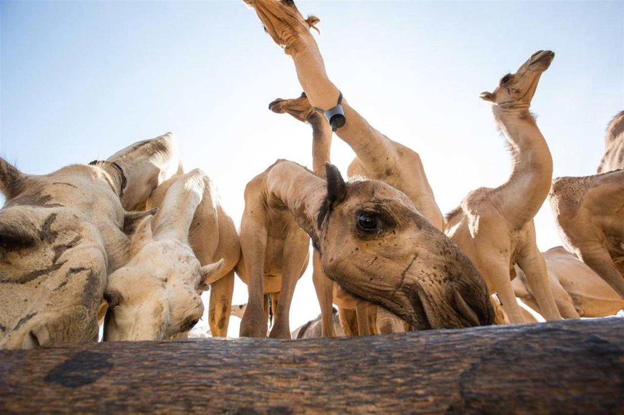 Camels at the wells from below.jpg