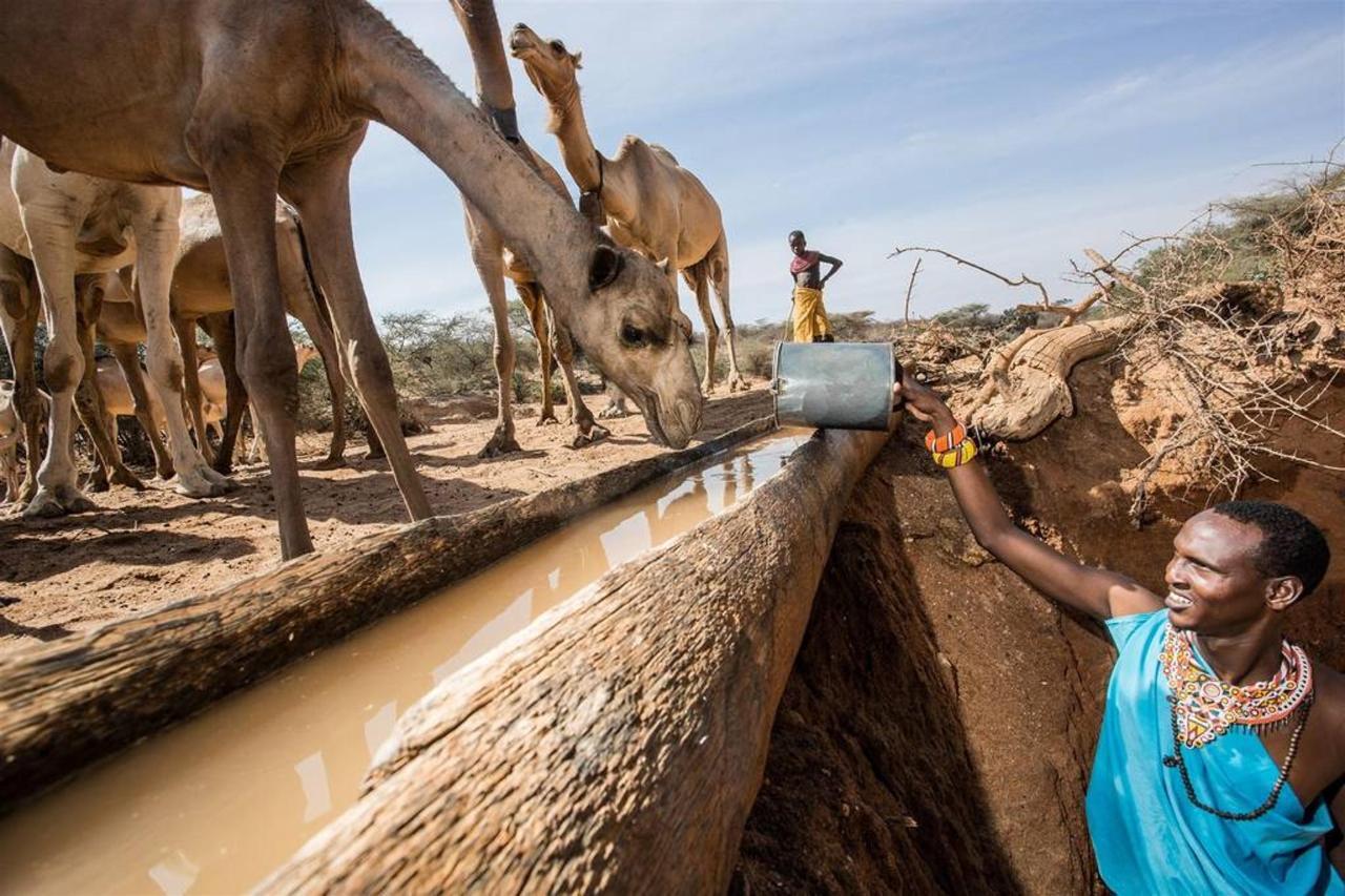 Thirsty camels.jpg
