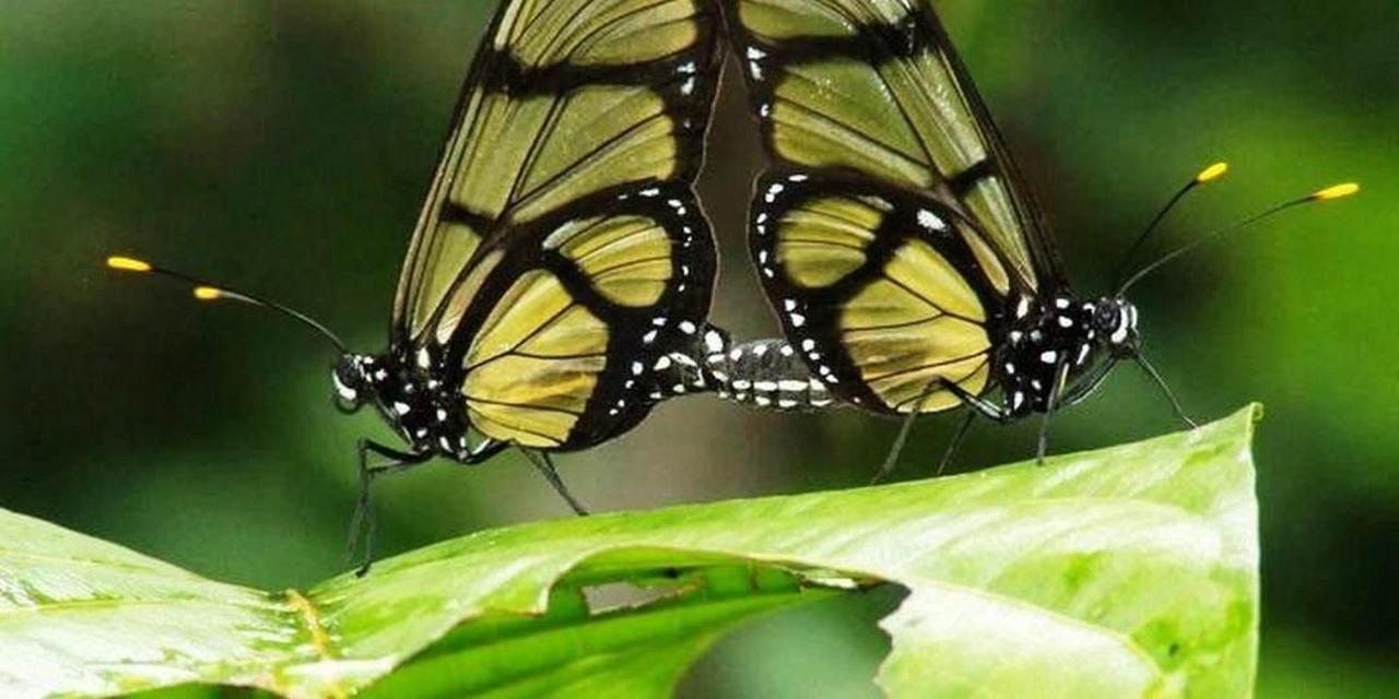 rainforest-jungle-trekking-a-cascade-latas-fine-aroma-of-the-ecuadorian-cacao-converted-in-c-21.jpg.1080x540.jpg