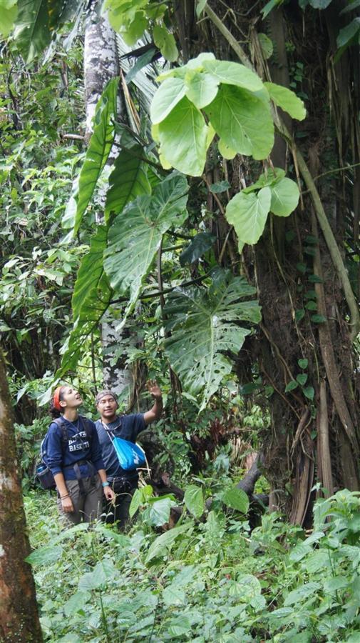 bird-observation-a-medicinal-plants-a-giant-ceibo-tree-a-river-tubbing-a-privat-10.JPG.1024x0 (1).JPG