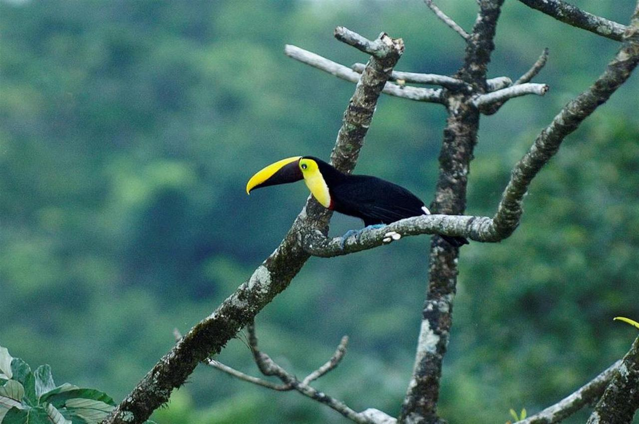 Bird Watching, Hotel Arenal Kioro Suites & Spa, La Fortuna, Costa Rica.jpg