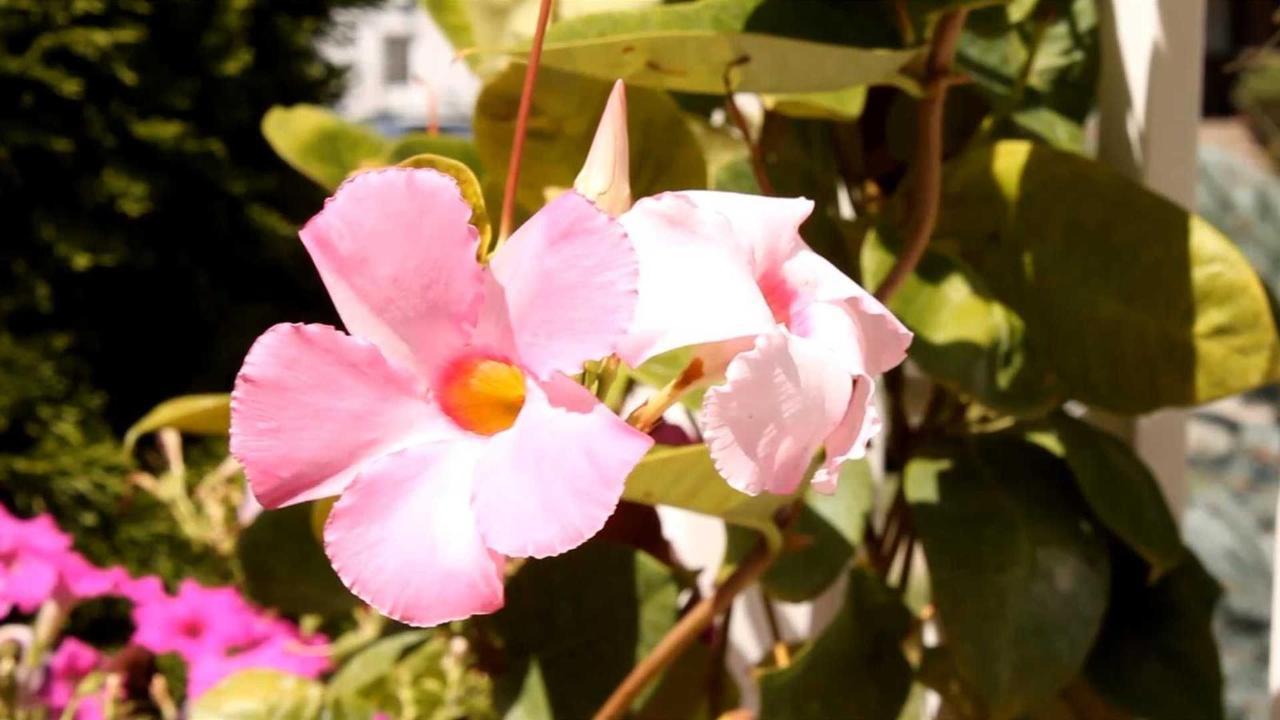 pss-flowers-blooming.jpg.1920x0.jpg