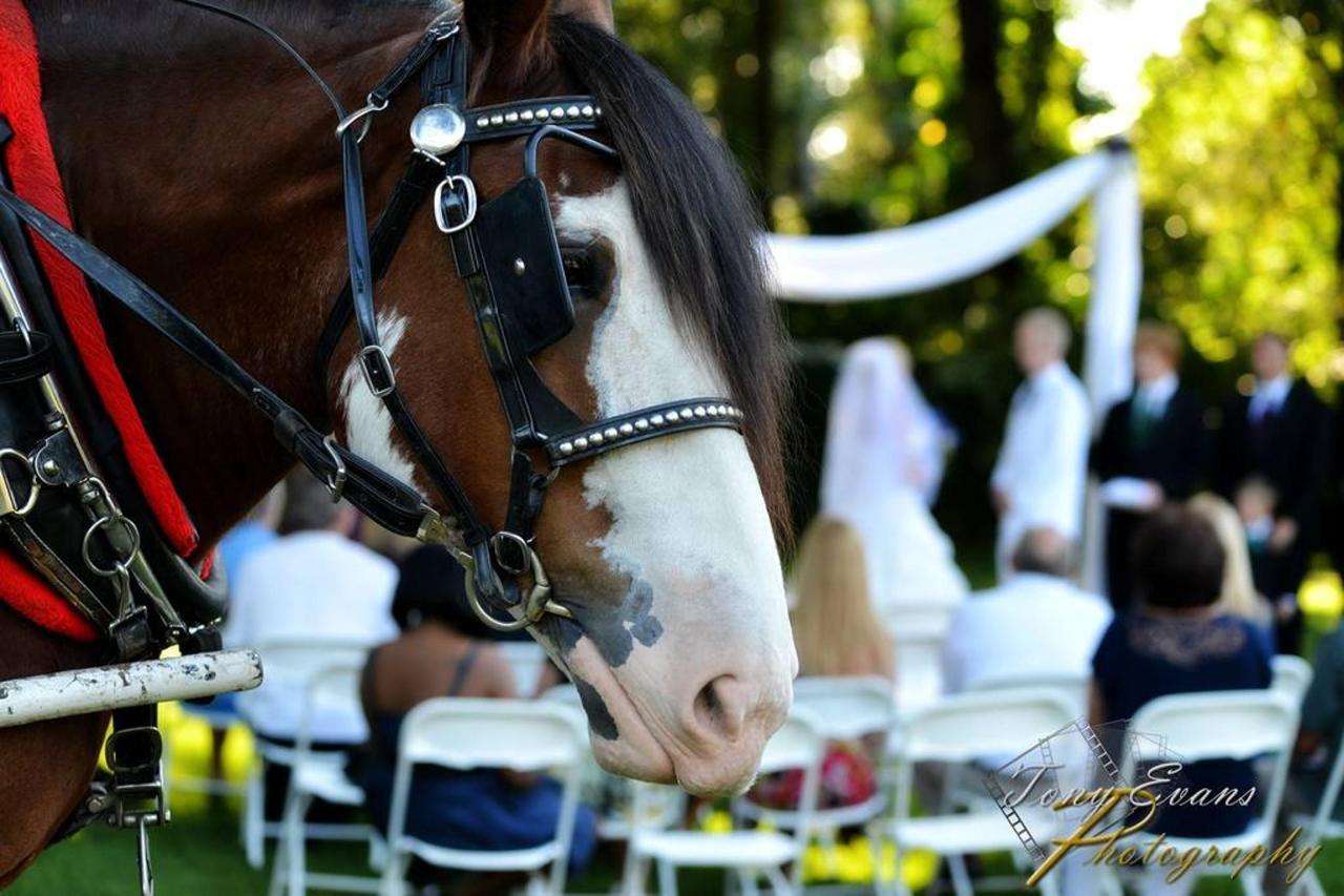 buddy-at-wedding-1.jpg.1024x0.jpg