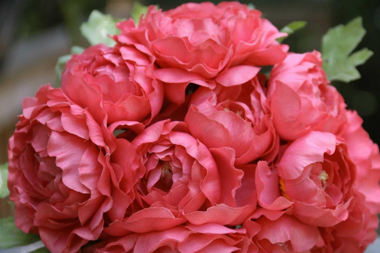 flowers-coral.JPG.1920x0.JPG