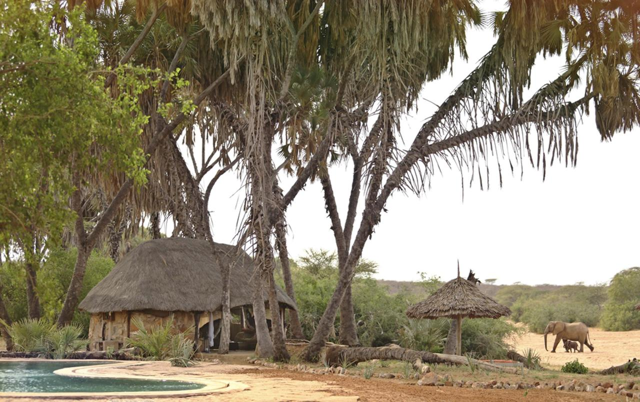 Accommodation pool and wildlife at Saruni Rhino.jpg