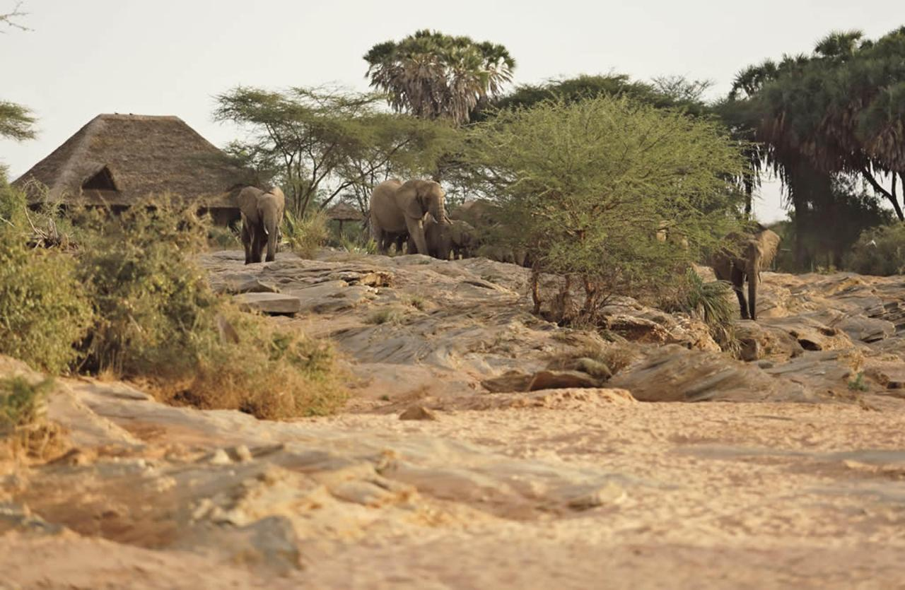 Elephants at the waterhole at Saruni Rhino.jpg