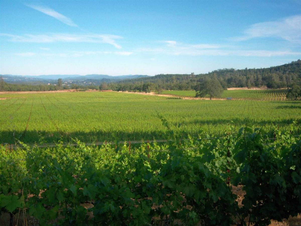 six-sigma-vineyards11.jpg.1920x0.jpg