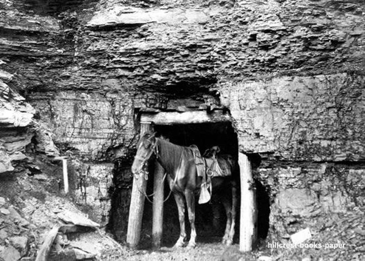 elkhorn-coalmine.jpg.1080x0.jpg