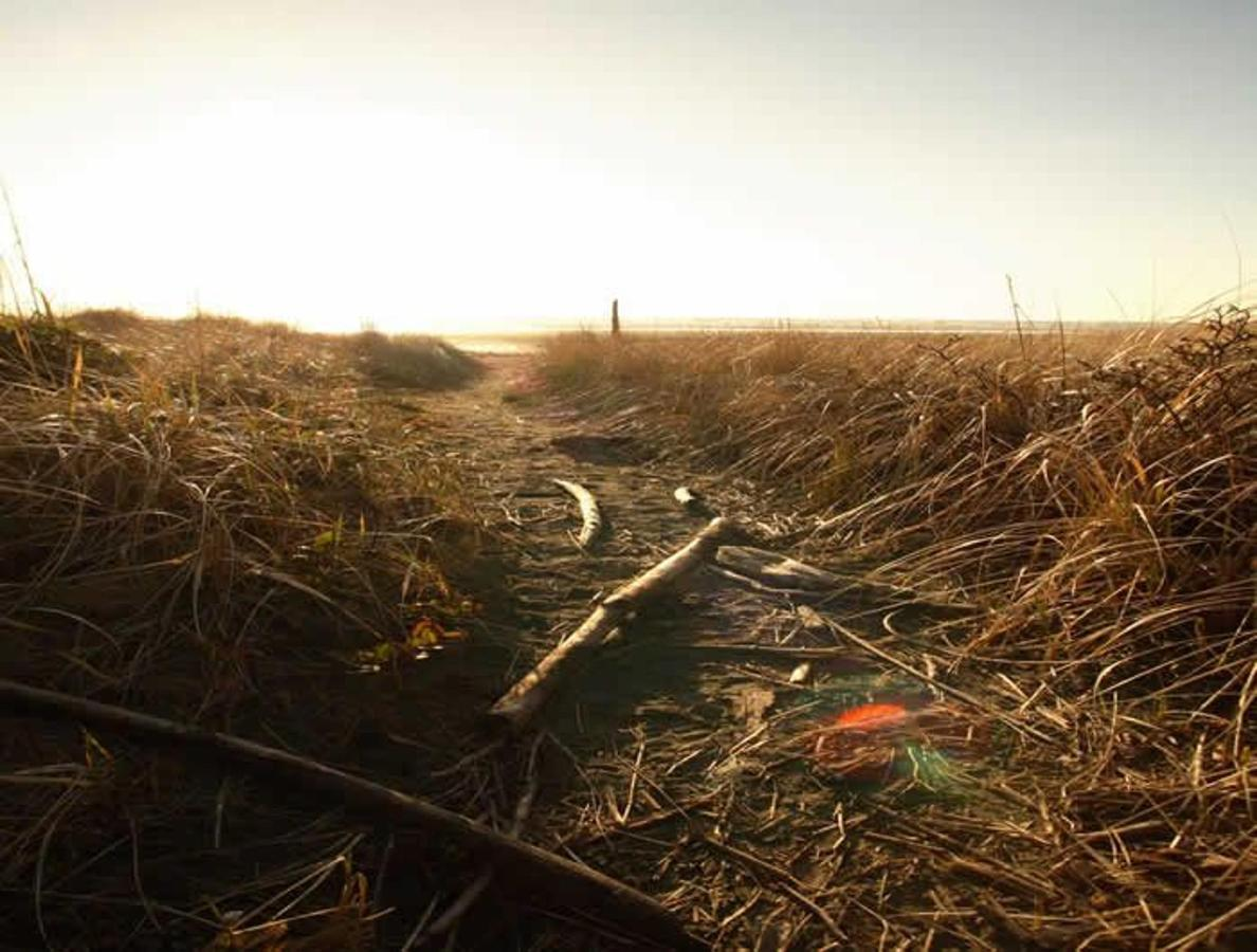 Path through the dunegrass