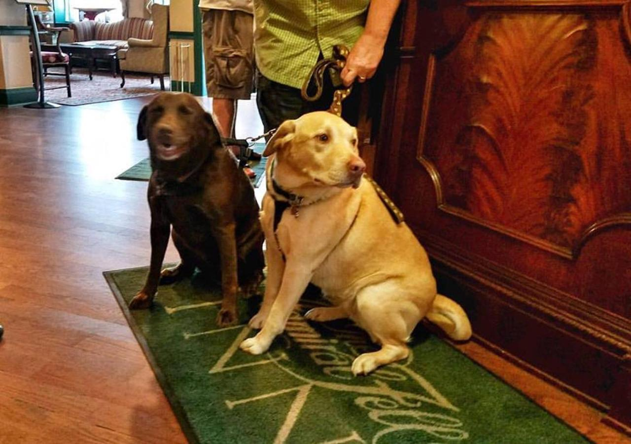 Admiral Fell Inn Pet Guest Calla and Lilly.jpg