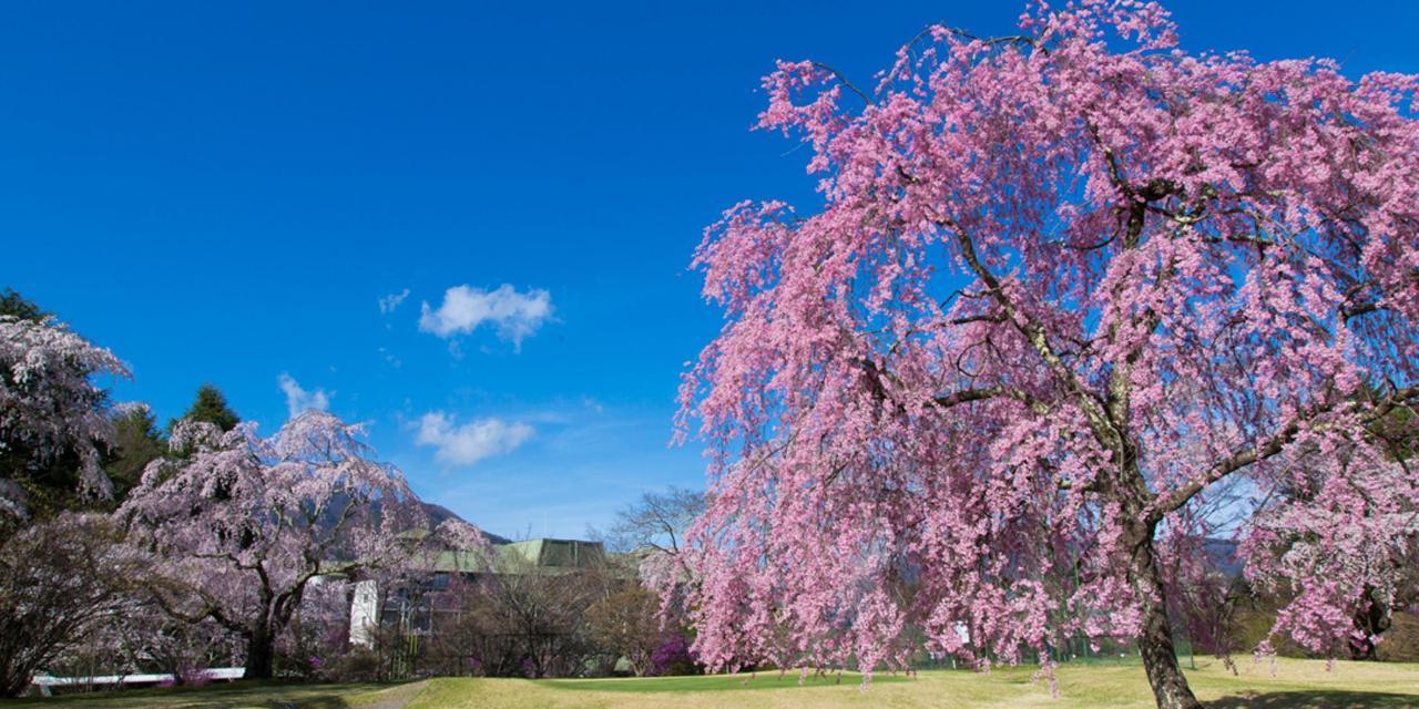 【Spring】Garden