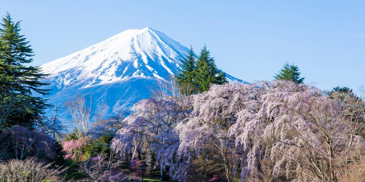 【ฤดูใบไม้ผลิ】ภูเขาฟูจิ