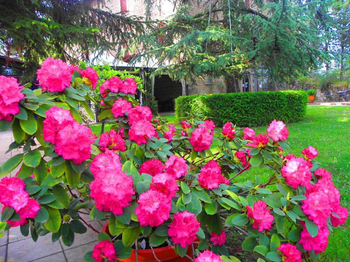 fiori.c.JPG