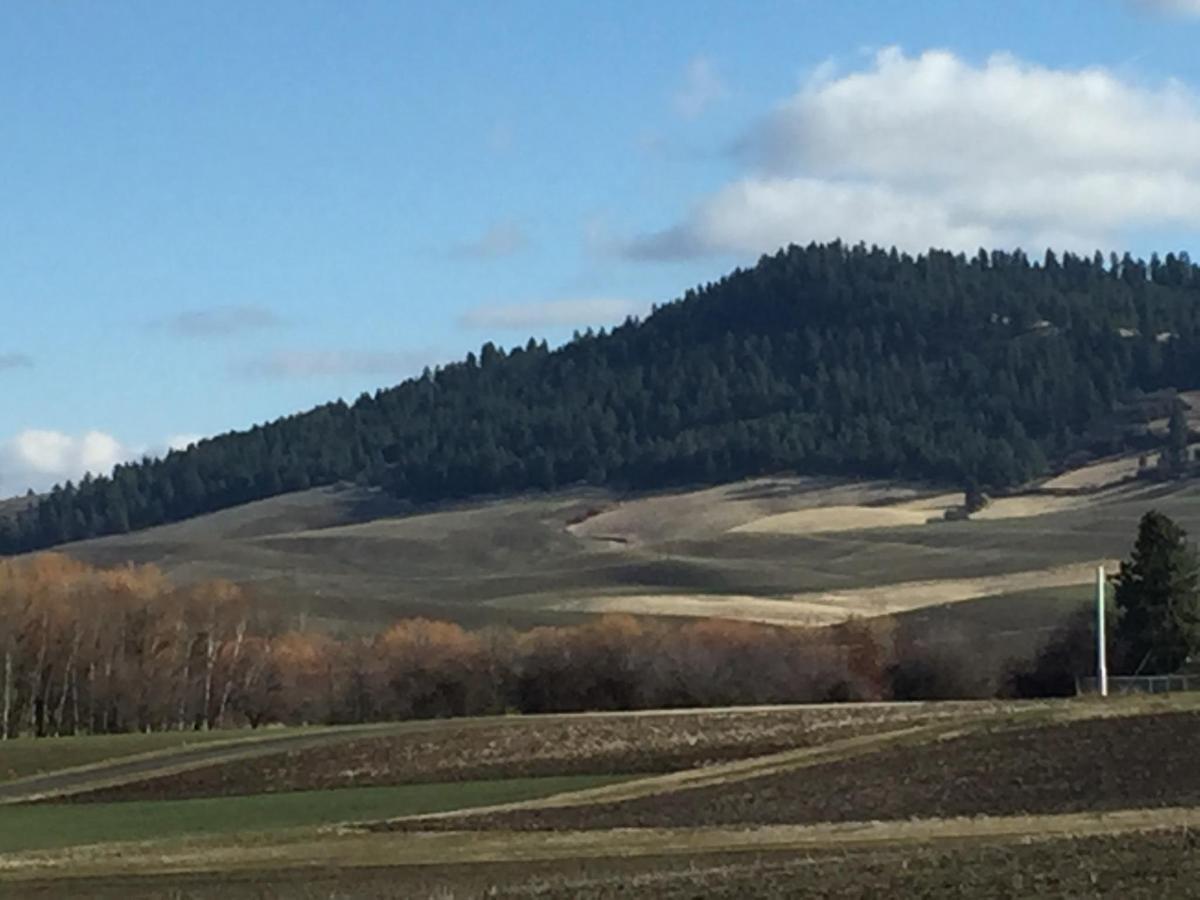 palouse hills.jpg