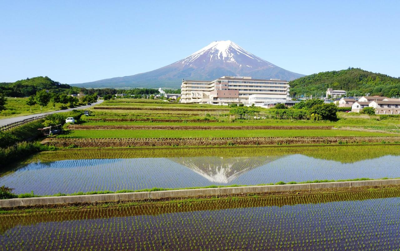 Rice field and Mt. Fuji