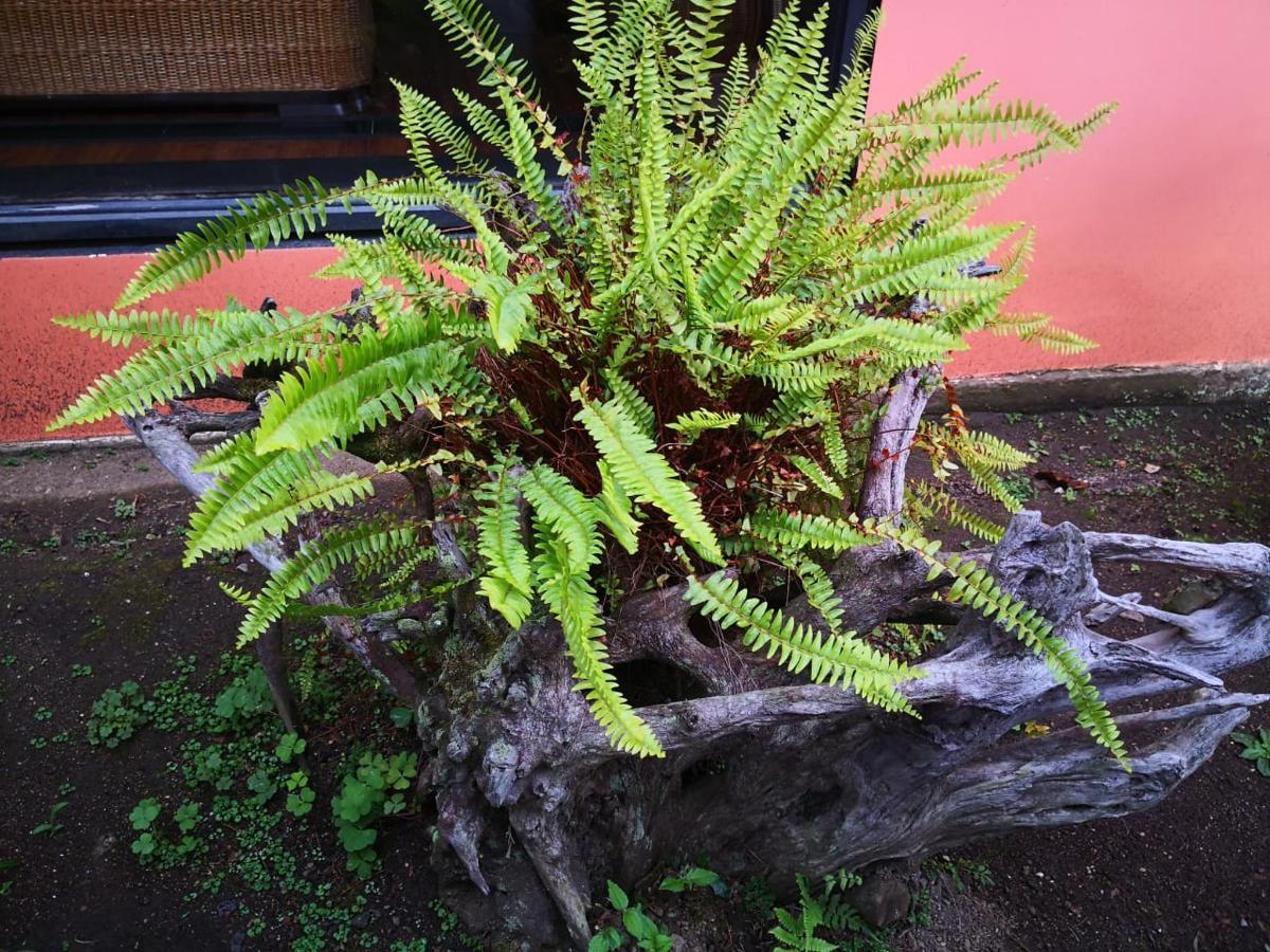 jardin 02.jpeg